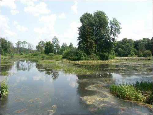 Парк Репихово - пруд.